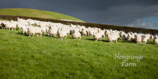 Newgrange Farm School Tours