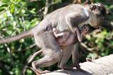 Meet the Monkeys Workshop