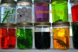 Spooky Halloween Science Camp